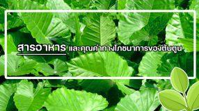 สารอาหาร และคุณค่าทางโภชนาการของต้นตูน